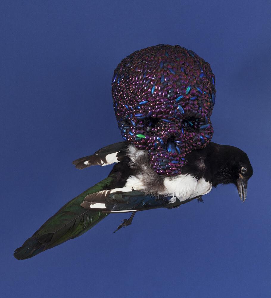 Jan Fabre, Skull with Magpie, 2001, galleria Il Ponte, Firenze