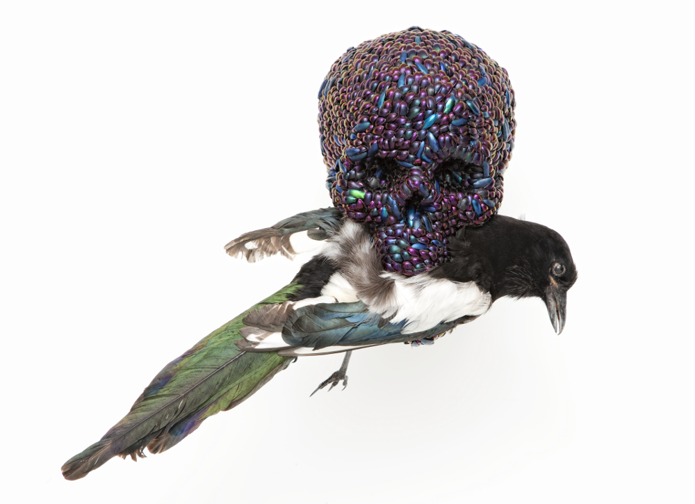 Jan Fabre, Skull with Magpie, 2011, galleria Il Ponte, Firenze_2