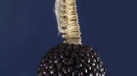 Jan Fabre, Salvator Mundi, 1998, buprestids, wire iron, angel's hair, bones, 50x20x40 cm