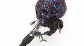 Skull with magpie, 2011, mixture of jewel beetle wing-cases, polymers, stuffed bird, 39x23x34 cm